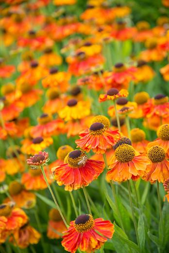 Kwiaty obrzeżowe