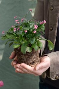rośliny wieloletnie