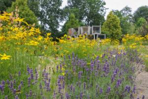 Zastosowanie roślin wieloletnich na cmentarzach