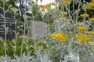 Zastosowanie roślin wieloletnich na cmentarzachdes plantes vivaces dans les cimetières