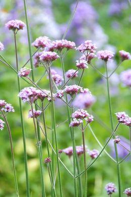 Kwitnące rośliny ogrodowe? Byliny to uczta dla oczu na wiele lat image