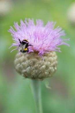 Posadź byliny i zmień swój ogród w raj dla pszczół