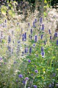Nowy trend w ogrodnictwie: byliny zielne