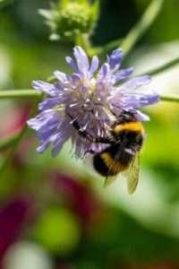 Byliny to nieodłączny element bioróżnorodności: zapraszają do siebie motyle, pszczoły i ptaki z otwartymi ramionami!
