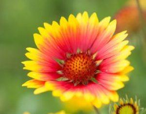 Rośliny ozdobne: im więcej, tym weselej