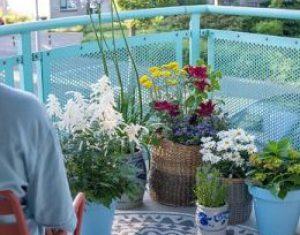 Rośliny balkonowe mogą wywołać uśmiech na Twojej twarzy